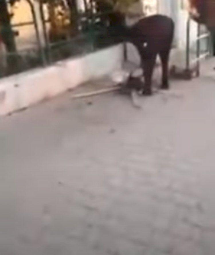 Caserta, gattino  morto a causa di una pallottola che gli è stata sparata in strada