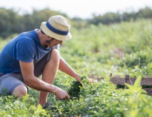Salute, sempre più famiglie comprano dagli agricoltori