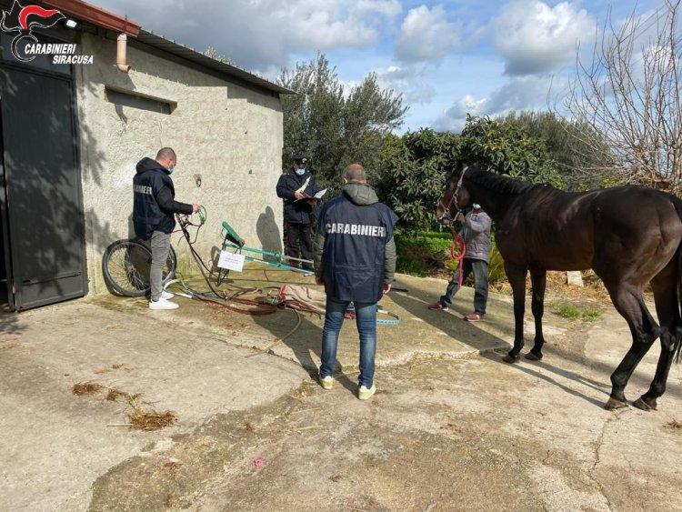 Noto (SR): corsa clandestina di cavalli