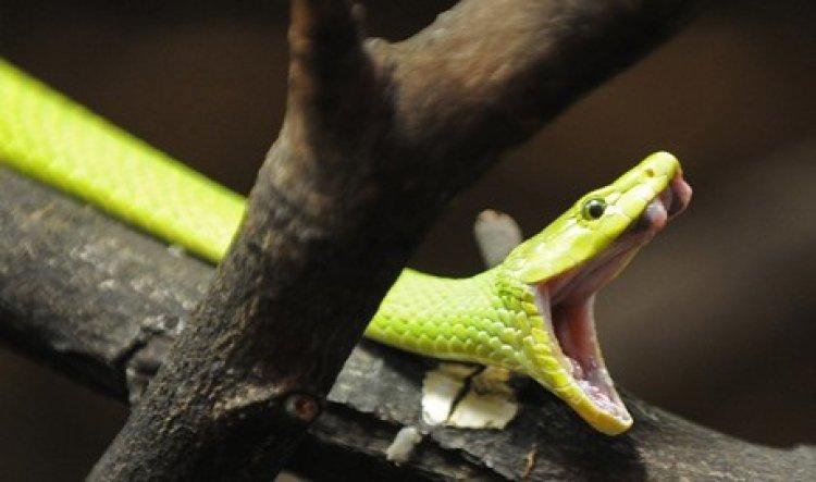 Trovano serpente velenoso nell'insalata  acquistata nel supermercato