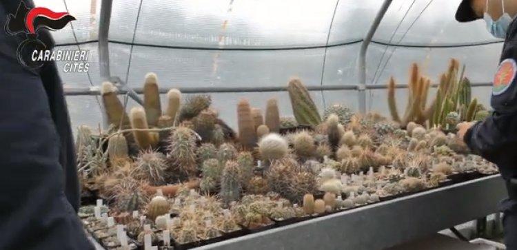 Ancona, il rimpatrio dei cactus sequestrati