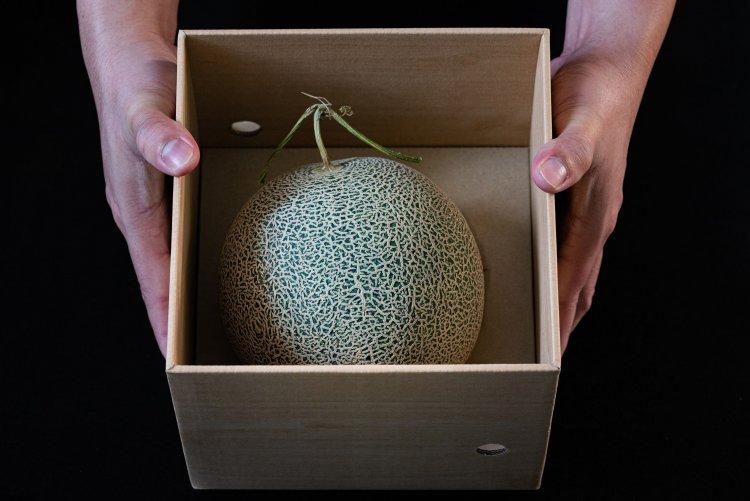 Giappone: due meloni venduti all'asta per oltre 20mila euro!