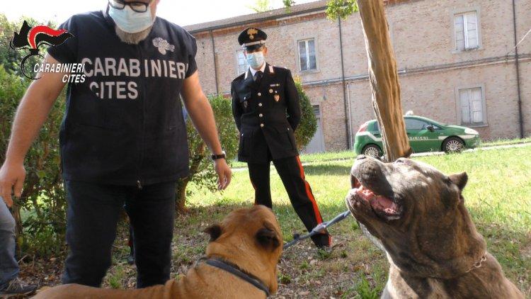 Maltrattamento di animali e traffico internazionale: 40 denunciati