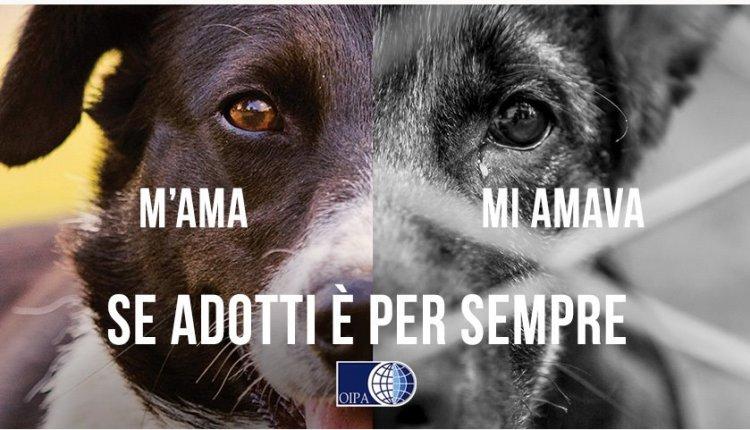 Tursi (MT). Grazie a Oipa, il sindaco annulla ordinanza contro i cani