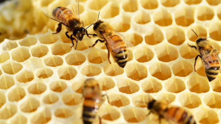 Piemonte: nuovo regolamento per l'apicoltura
