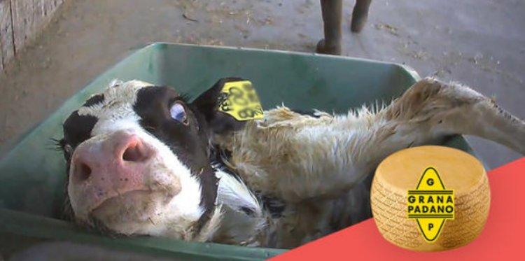 Essere Animali, Organizzazione per i Diritti Animali, ha realizzato immagini shock